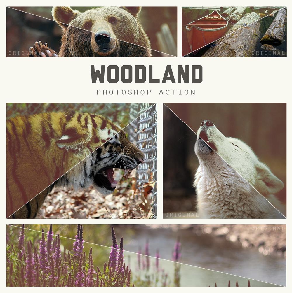 Woodland Photoshop Action