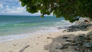 Rocky Shade Beach - Video