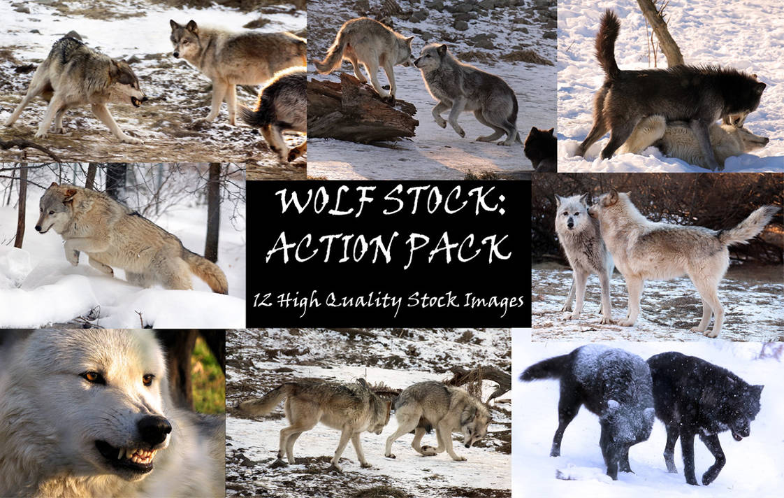 Wolf Stock: Premium Action Pack