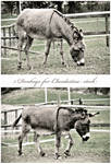 5 donkeys by clandestine-stock