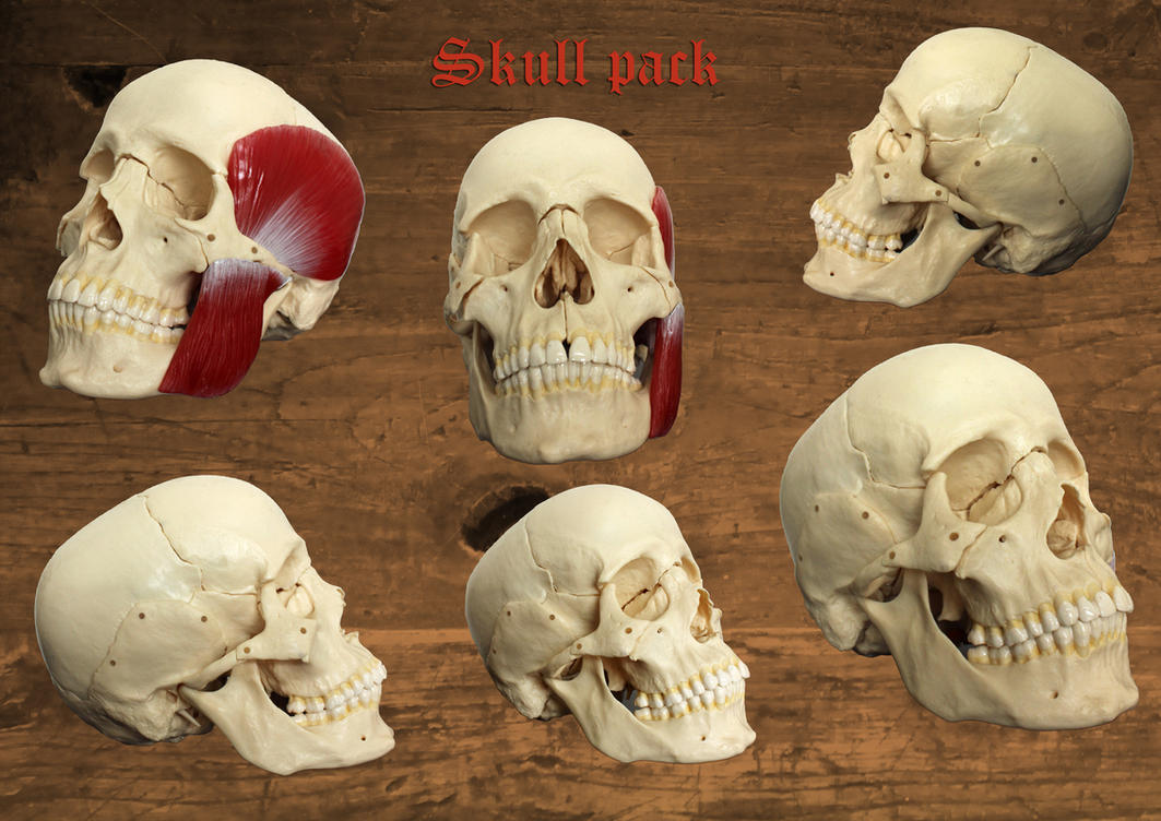 SKull pack by tamaraR-stock