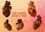 Human Heart Collection