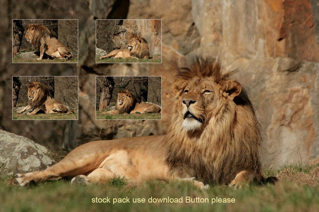 Lion stock pack by Drezdany-stocks