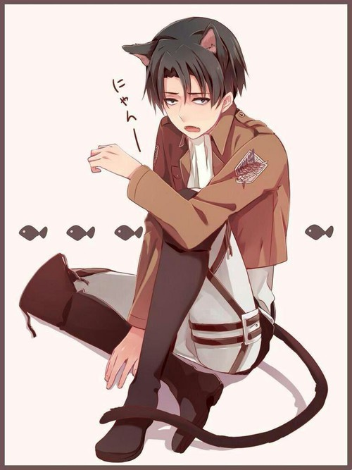 Love Me For Once! (Neko!Levi x Reader) Short Story by