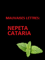 Mauvaises Lettres - Nepeta Cataria by sgrildrig