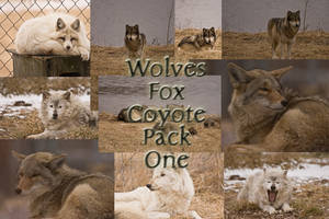 Wolves Fox Coyote Pack One