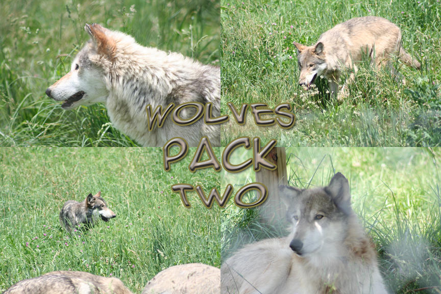 Wolves Pack - 2 by Seductive-Stock