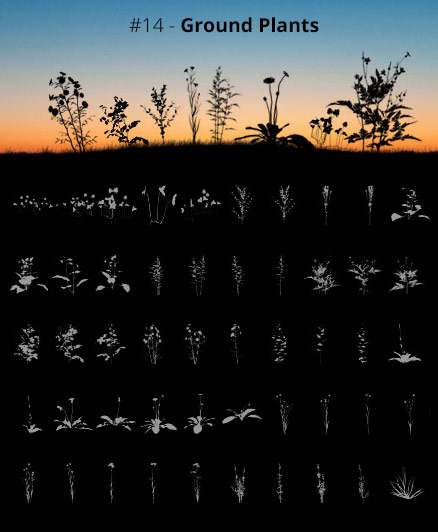 Tree Silhouettes vol.14 - Ground Plants by Horhew