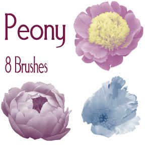 Peony Brushes by snathaid-mhor