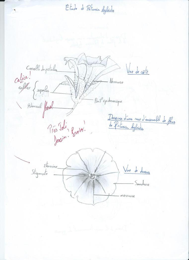 Plant Biology/Botanic Studies (University) by Malaurielle