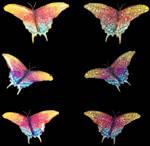 Mariposas-07