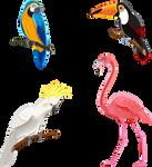 Aves-2020-01
