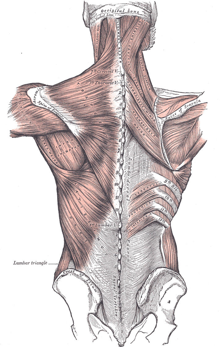 Anatomy by tezrin
