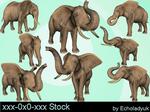Elephants pack of 8