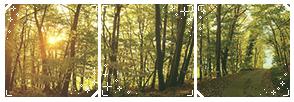 (f2u) Forest Divider 1 by StarstruckDoodles