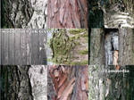 wood bark textures
