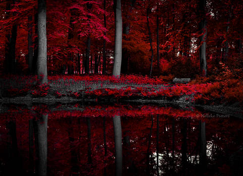 Scarlet Lake II