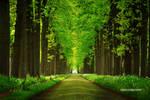 Two Way Lane