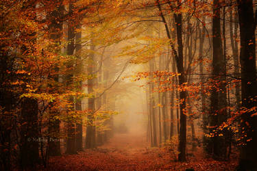 Autumn by Nelleke