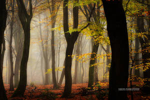 Autumn Magic by Nelleke