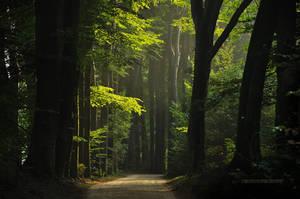 Green Days by Nelleke