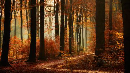 Autumnal Fairytale by Nelleke