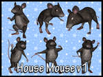 House Mouse v1