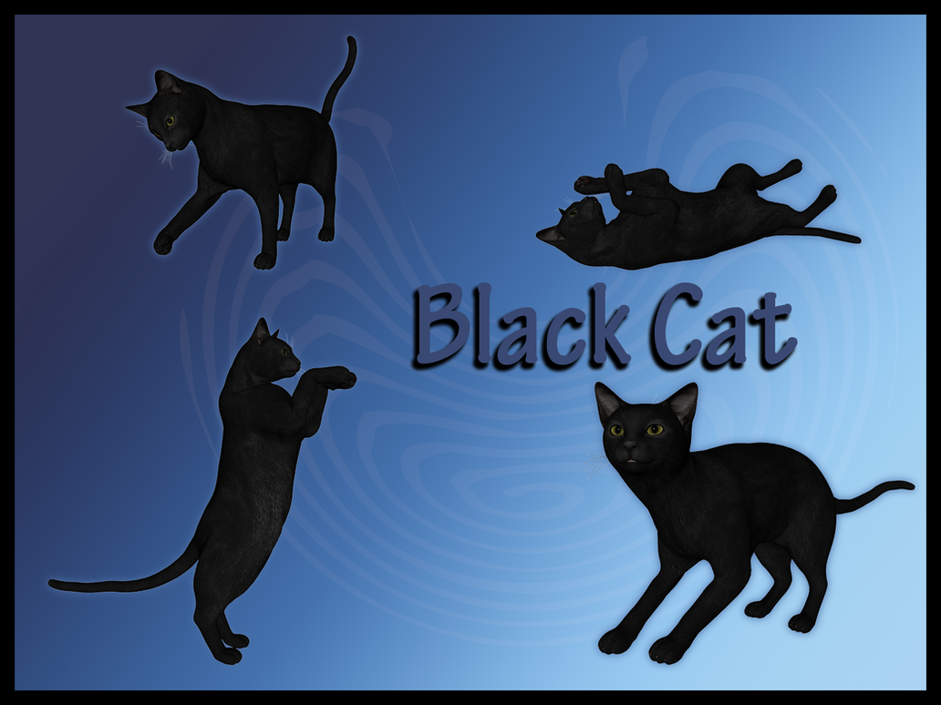Black Cats by Stock-by-Dana
