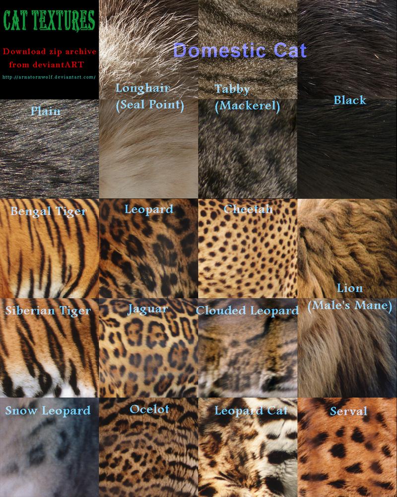 Texture - Cat by ArnaTornwolf