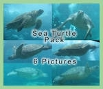 Sea Turtle Pack