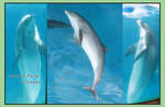 Dolphin Pack 2