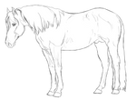 Stock Horse Stallion | Free Lines