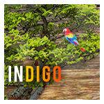 INDIGO-WEB INTERFACE by Solaris07