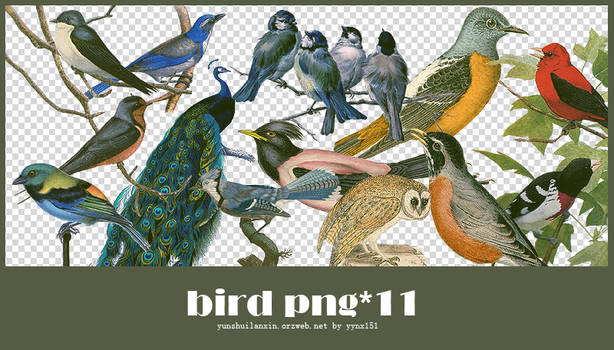 Bird png pack #04