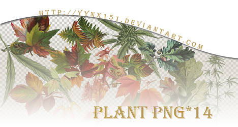 Plant png pack #01