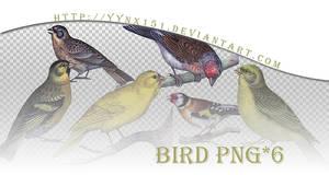 Bird png pack #05