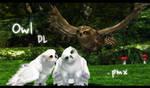 Owl model DL