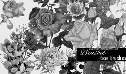 819b91dbb8d Childoftheflower 3 0 Brushes - Roses by AnthonyGimenez