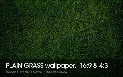 Plain Grass by sniperyu