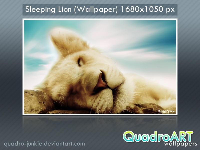 Sleeping lion wallpaper by quadro junkie on deviantart