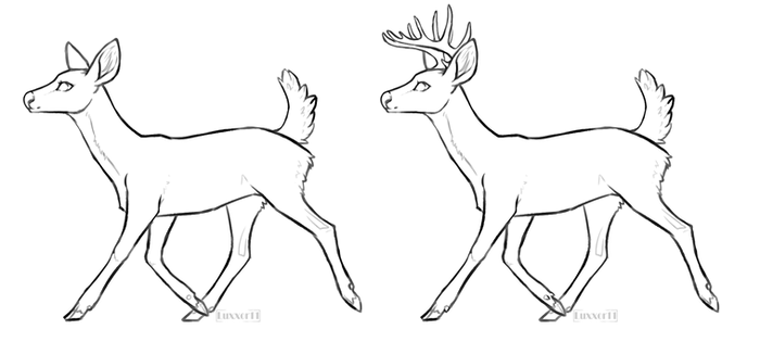 F2U whitetail buck and doe base