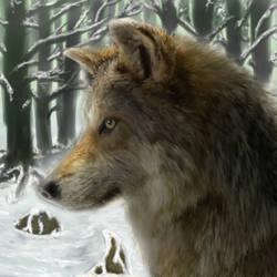 Grey wolf by GrowLegends