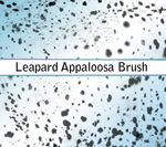 Leapard Appaloosa Brush by Taint-ed