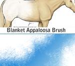 Blanket Appaloosa Brush