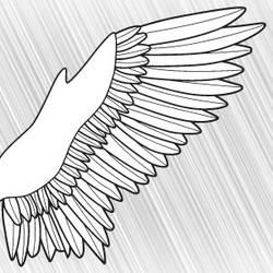 A Bird Wing by clickpopmedia