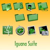 Iguana Suite