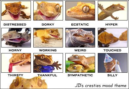 awpic gecko