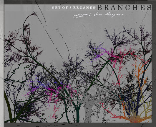 Branches by agnesvanharper