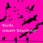 Birds Smart Brush Set