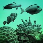 Chris' Fish and Coral